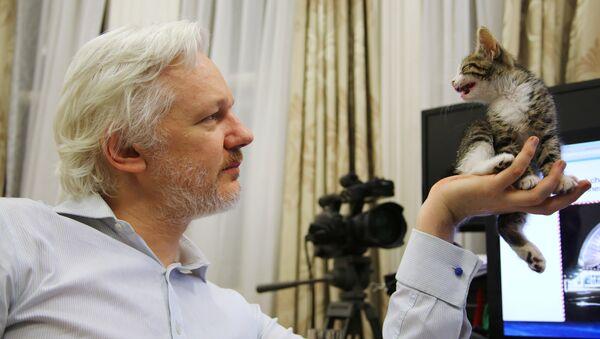 Julian Assange con su nueva amiga felina - Sputnik Mundo