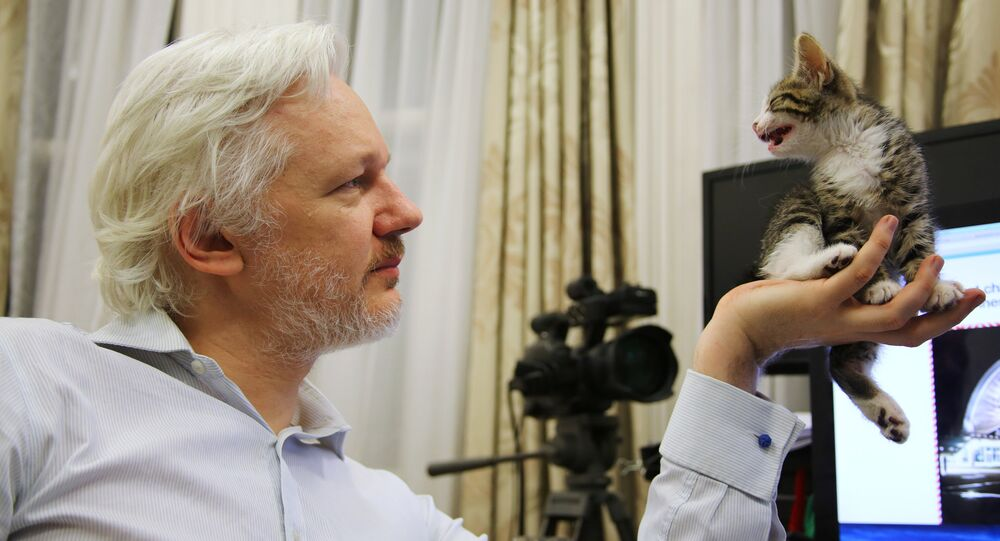 Julian Assange con su nueva amiga felina