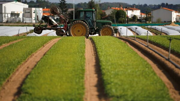 Un tractor en unos cultivos (imagen referencial) - Sputnik Mundo