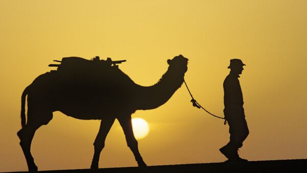 Un camello - Sputnik Mundo