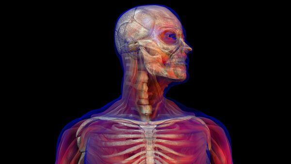 Cuerpo humano (ilustración) - Sputnik Mundo