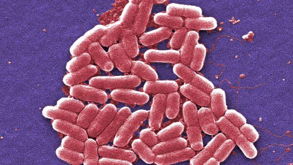 Superbacteria ultrarresistente hallada en EEUU - Sputnik Mundo