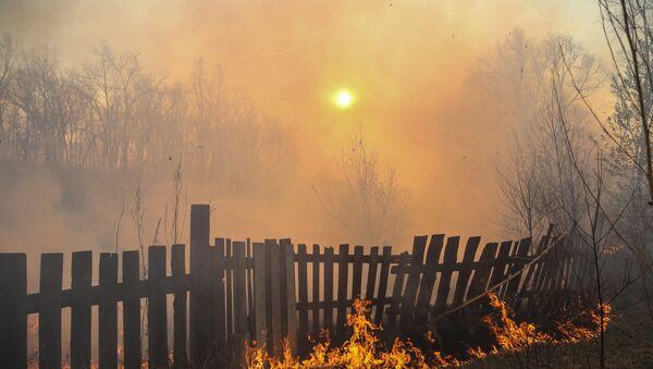 Incendio forestal - Sputnik Mundo