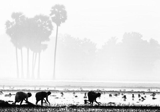 Agricultores de la India
