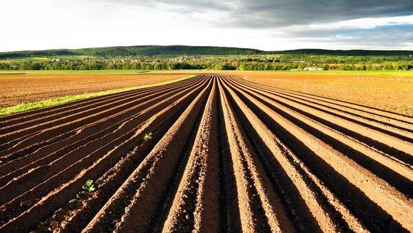 Tierra agrícola - Sputnik Mundo