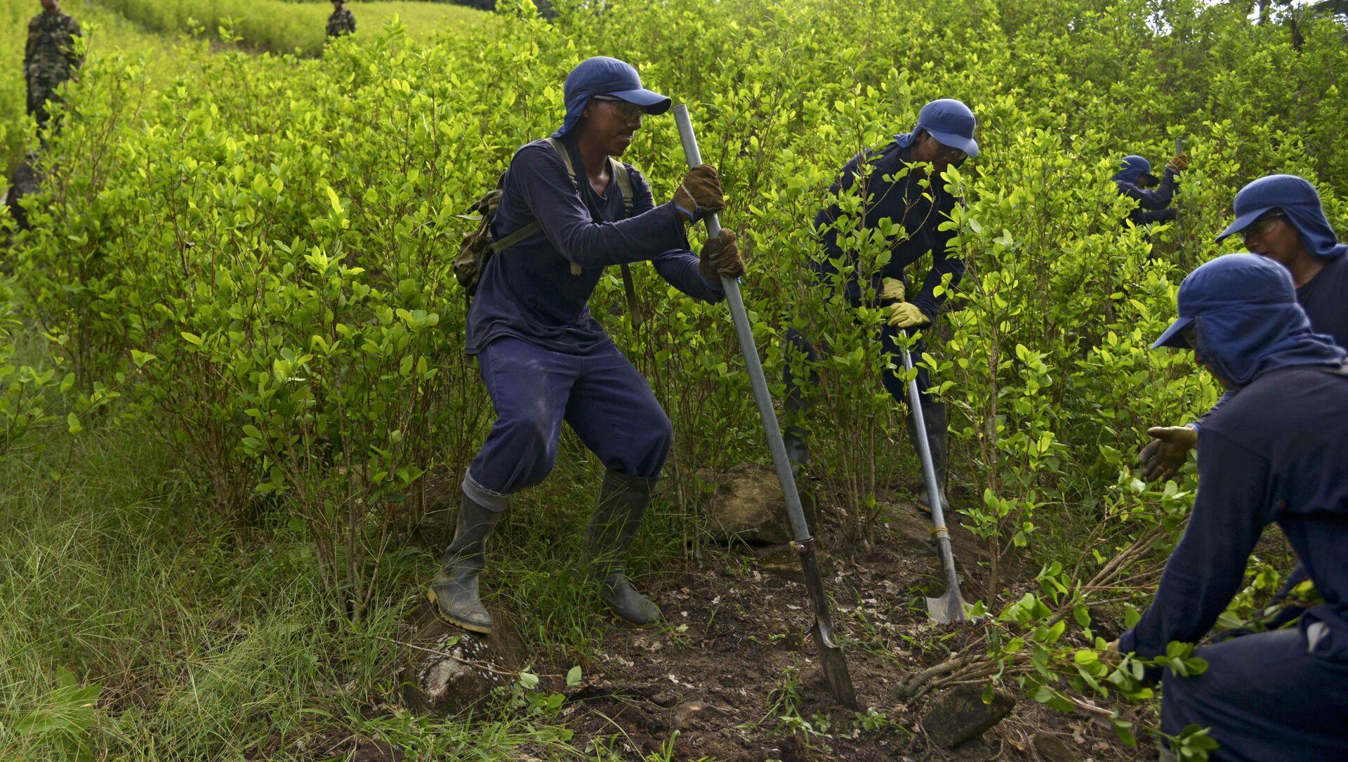 Erradicación de cultivos de coca en Colombia por parte de campesinos - Sputnik Mundo, 1920, 13.07.2020