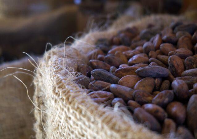 Cacao (imagen reefrencial)
