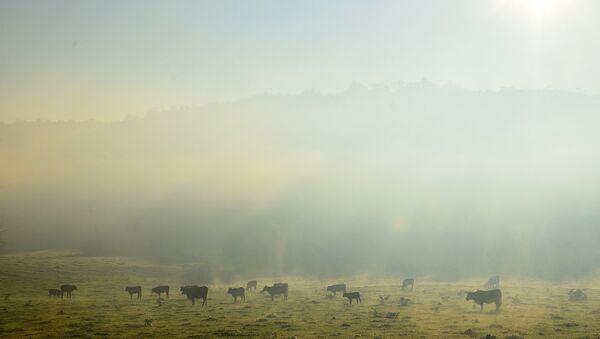 Amanecer con niebla en Valle Hermoso, Argentina - Sputnik Mundo