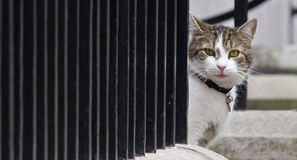 Larry, el gato
