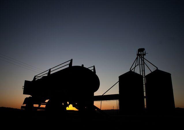 Un campo de trigo en Argentina