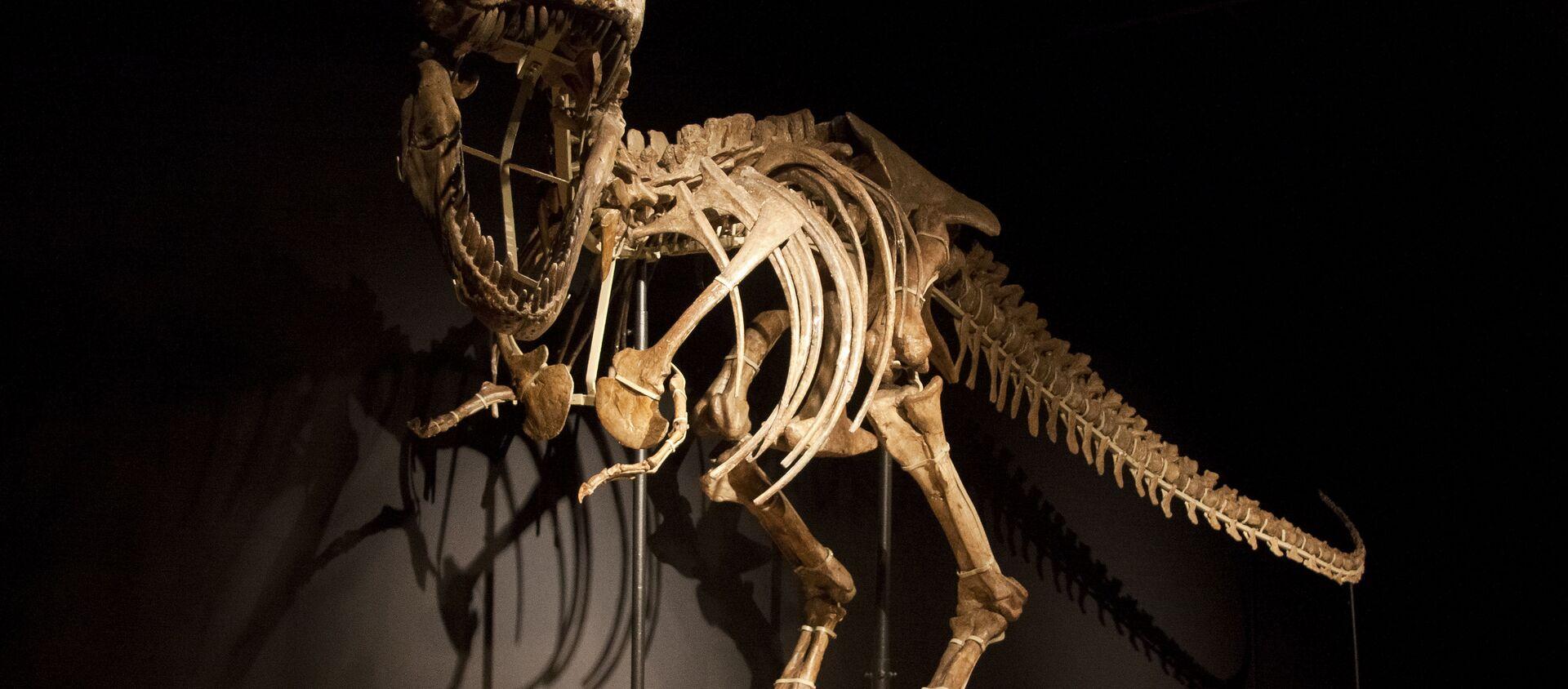 Esqueleto de un dinosaurio - Sputnik Mundo, 1920, 20.07.2017