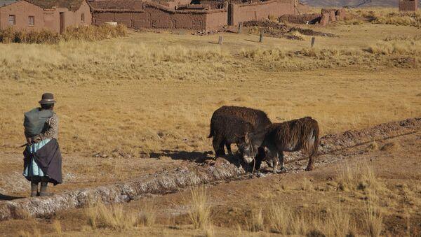 Una granja en Bolivia - Sputnik Mundo