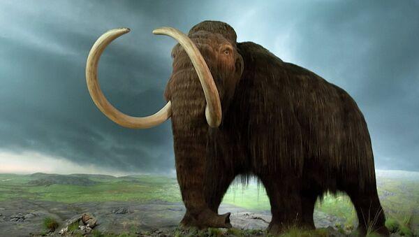 Un mamut - Sputnik Mundo