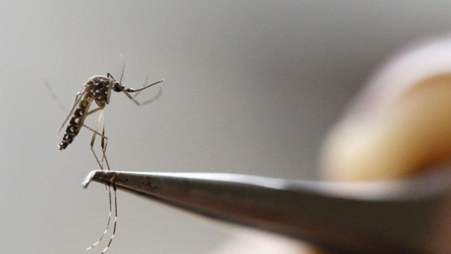 El mosquito Aedes Aegypti - Sputnik Mundo, 1920, 30.04.2021
