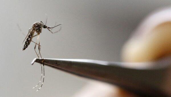 El mosquito Aedes Aegypti - Sputnik Mundo