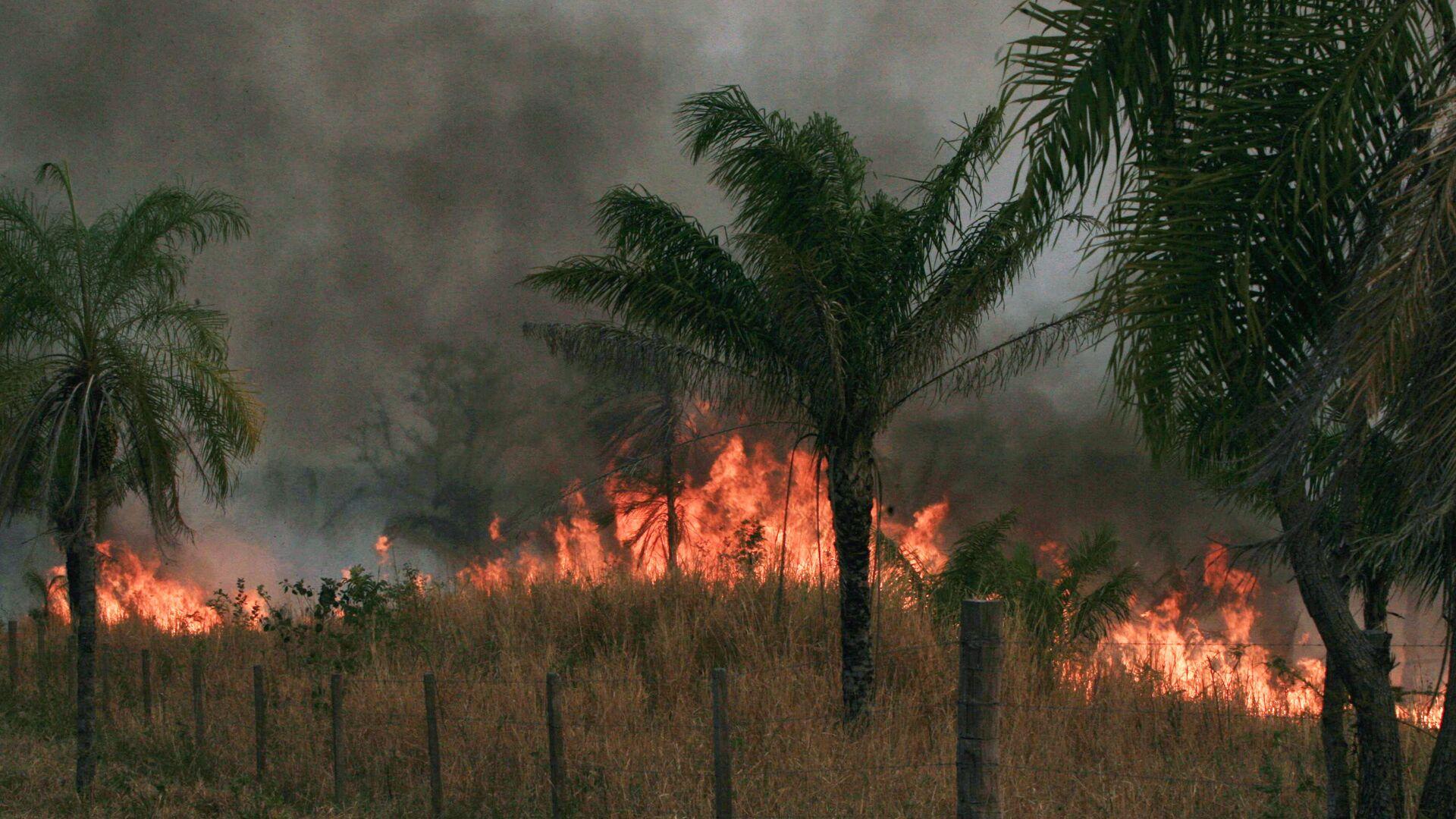 Incendios forestrales en Bolivia - Sputnik Mundo, 1920, 02.08.2021