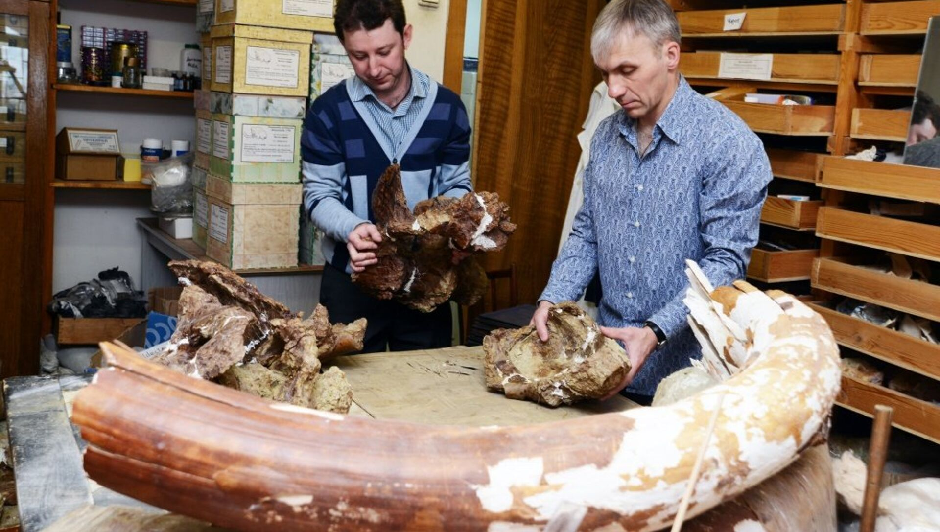 Investigadores rusos han hallado una especie completamente nueva de dinosaurios herbívoros. - Sputnik Mundo, 1920, 11.08.2016
