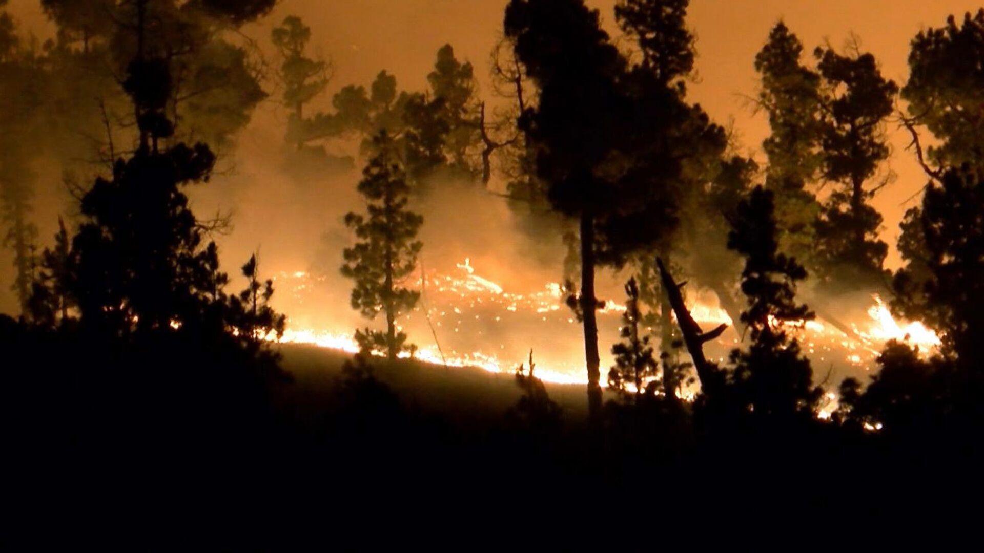 Incendio forestal (imagen referencial) - Sputnik Mundo, 1920, 28.07.2021