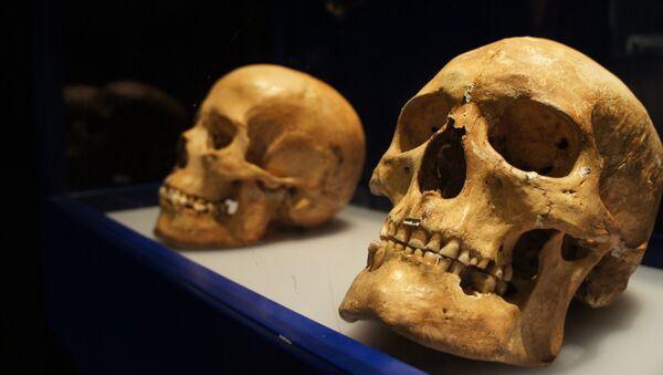 Cráneos en el Museo Histórico de Estocolmo - Sputnik Mundo