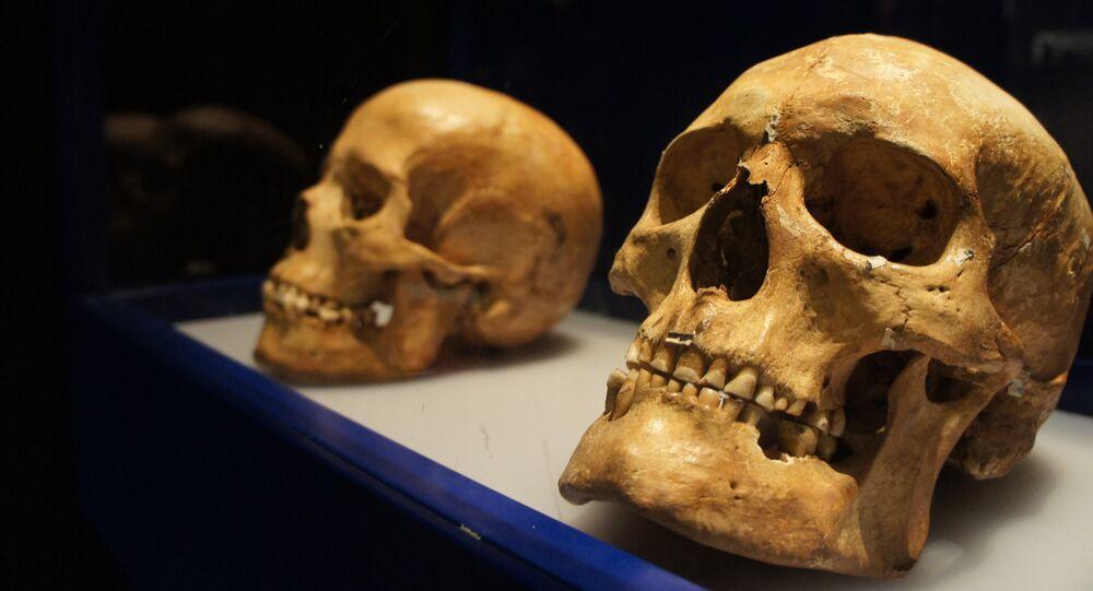 Cráneos