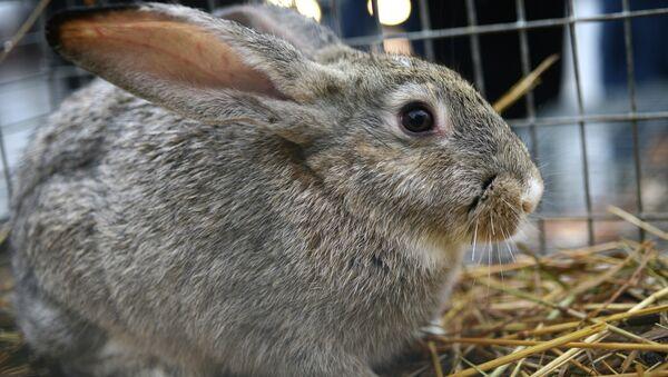 Conejo - Sputnik Mundo