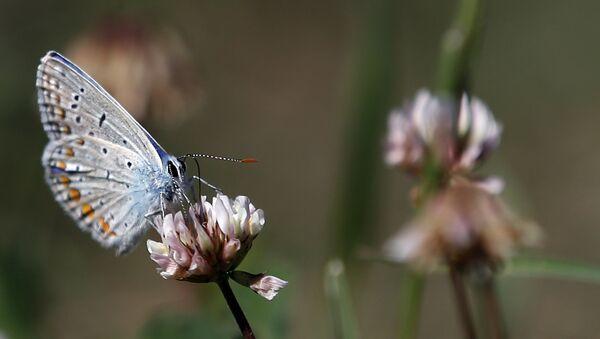 Una mariposa - Sputnik Mundo