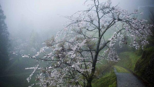 Shikoku, Japón - Sputnik Mundo