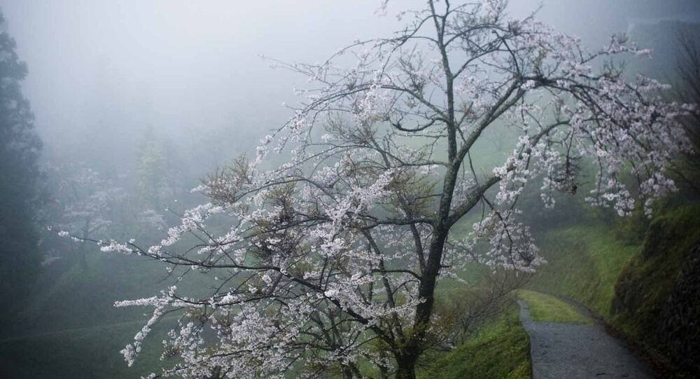 Shikoku, Japón