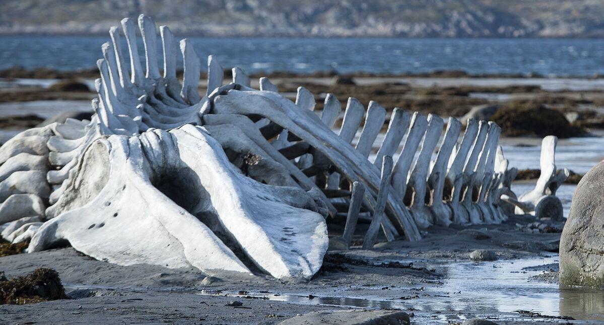 La verdad sobre el monstruo del lago Ness, por fin al descubierto ...