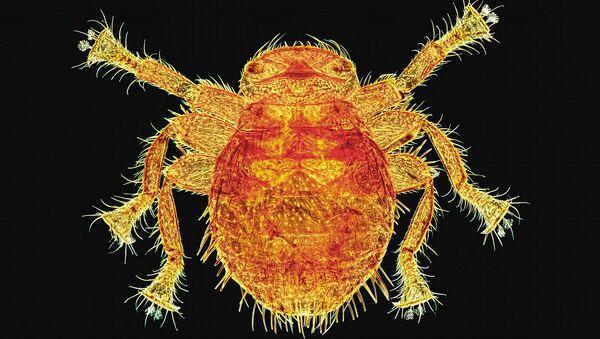 La belleza del micromundo: ¿puedes adivinar lo que hay en las imágenes? - Sputnik Mundo