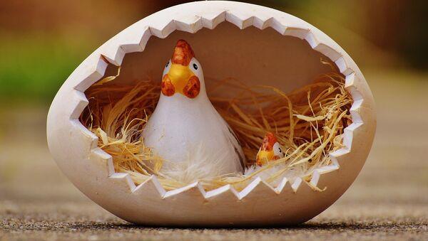 Una gallina dentro de un huevo (ilustración) - Sputnik Mundo