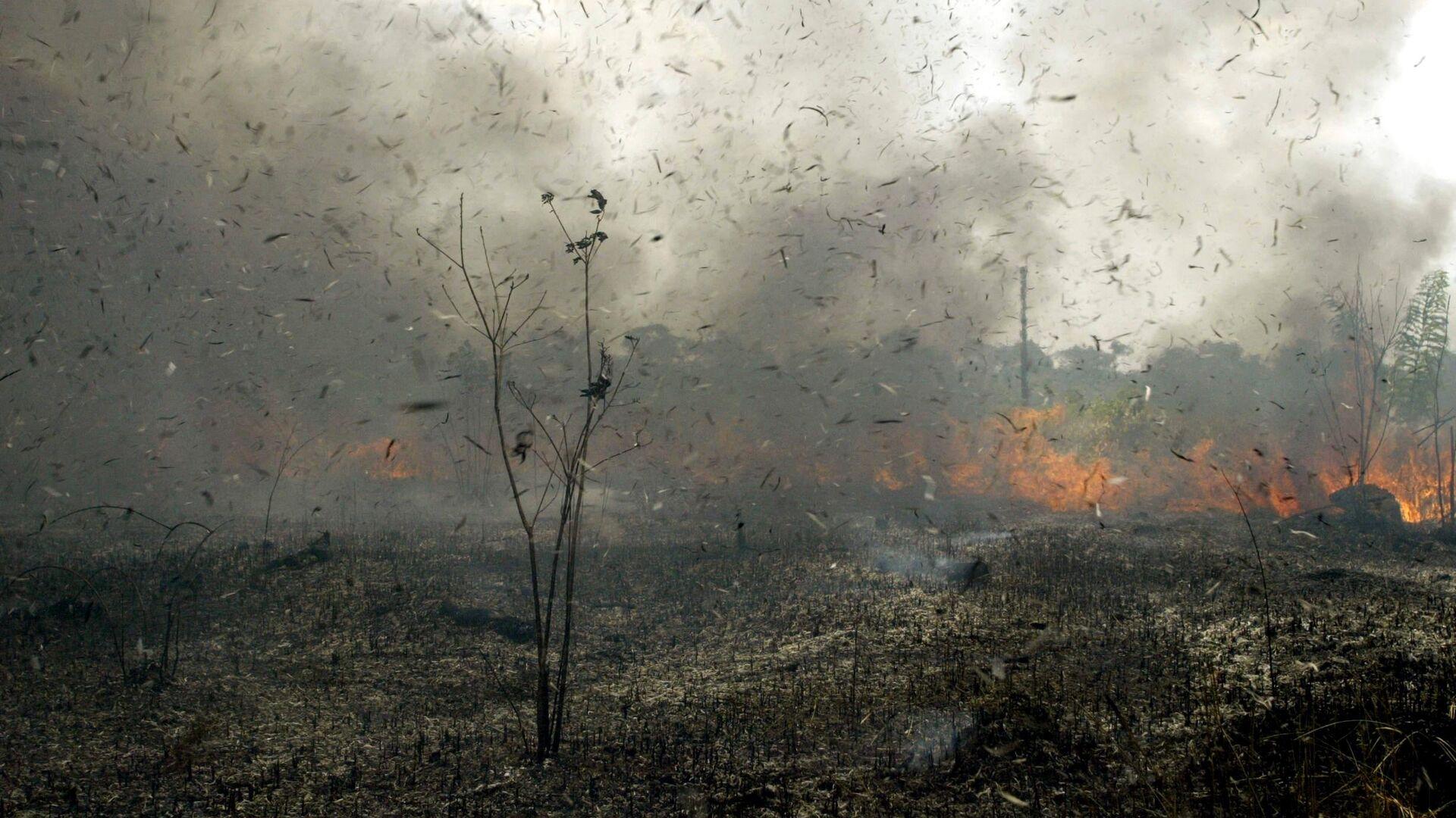 Los incendios forestales - Sputnik Mundo, 1920, 20.08.2021