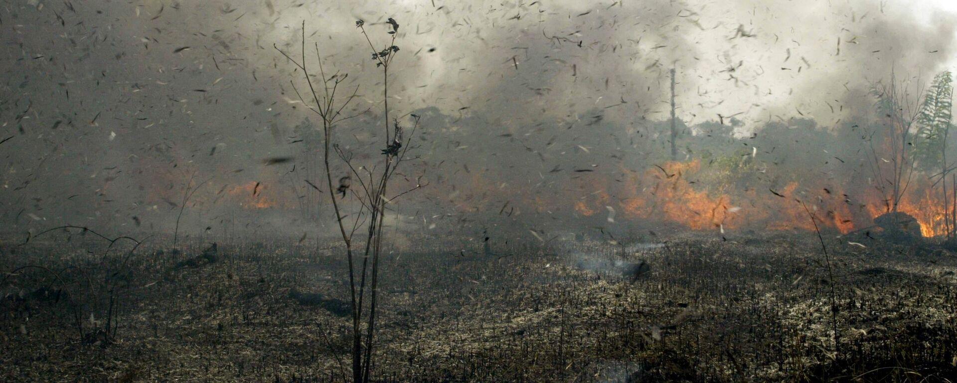 Los incendios forestales en Bolivia  - Sputnik Mundo, 1920, 11.08.2021