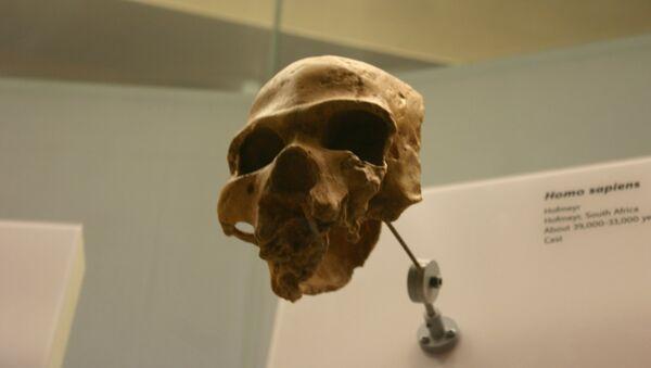 Homo sapiens - Sputnik Mundo
