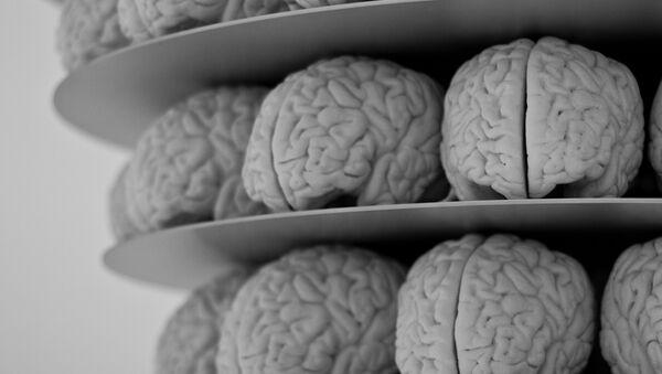 Cerebros - Sputnik Mundo