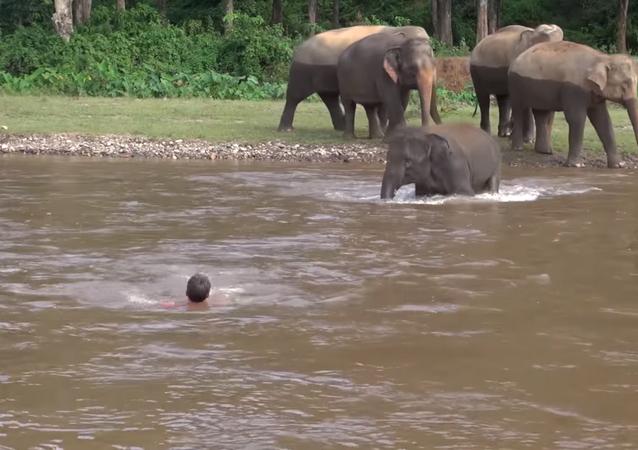 Un 'heroico' elefante se lanza a las aguas para salvar a su cuidador