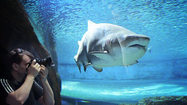 En un acuario - Sputnik Mundo