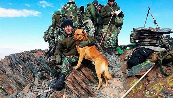 Ejército de Argentina asciende a sargento a un perro - Sputnik Mundo