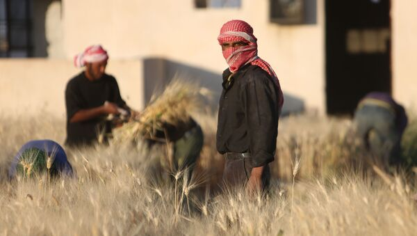 La cosecha del trigo (Archivo) - Sputnik Mundo