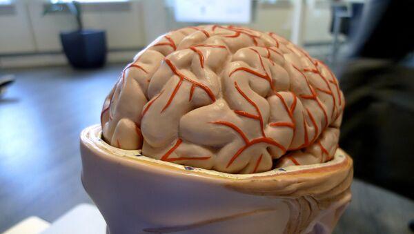 Cerebro (archivo) - Sputnik Mundo
