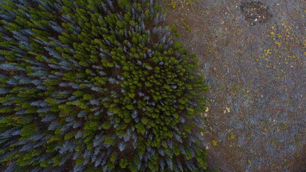 Deforestación (archivo) - Sputnik Mundo