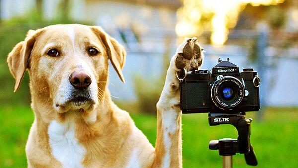 A dog and a camera - Sputnik Mundo