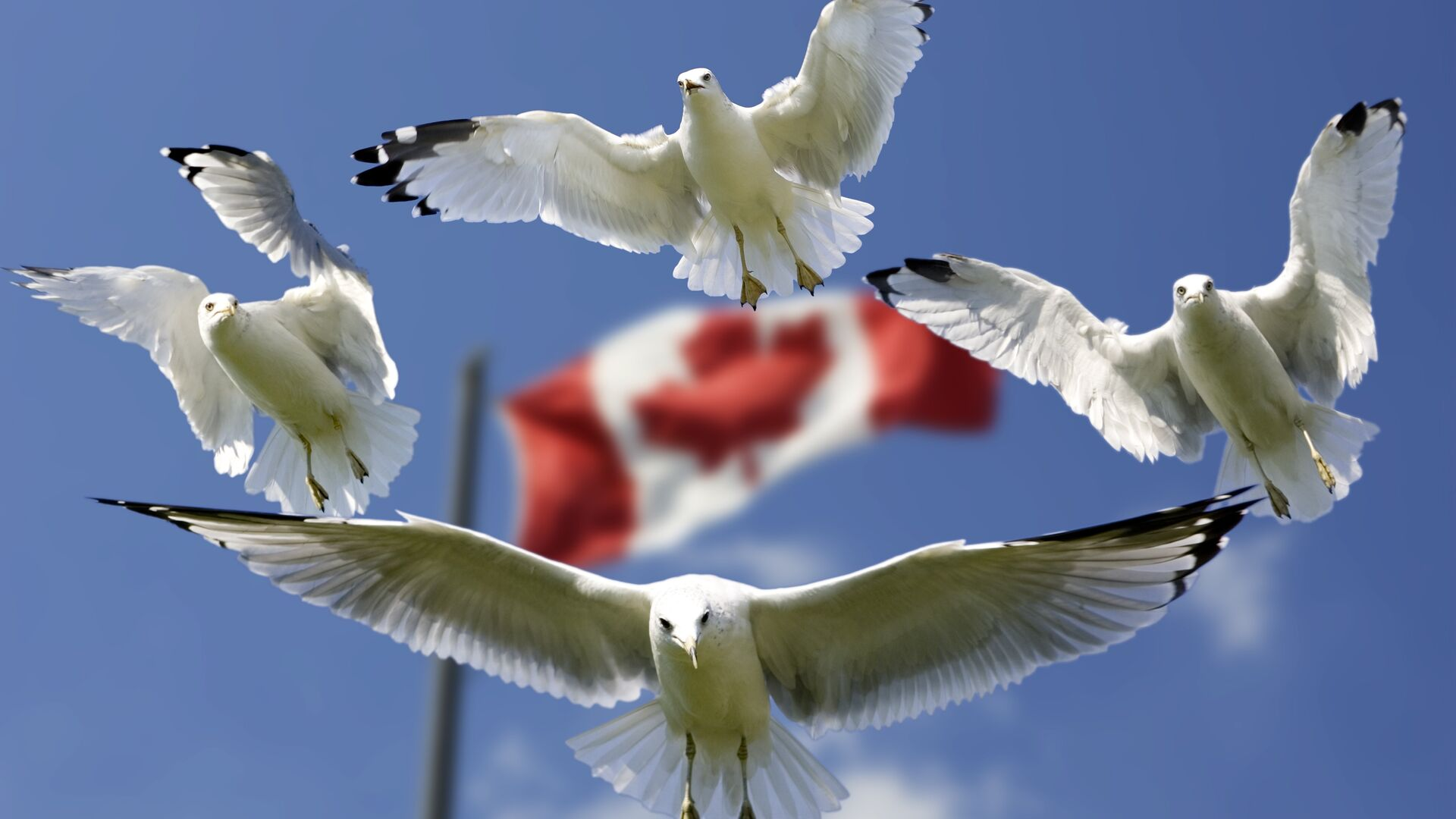 La bandera de Canadá - Sputnik Mundo, 1920, 07.04.2021