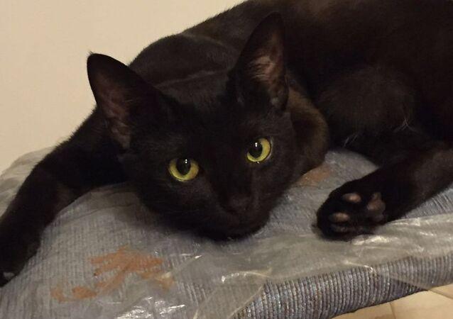 Gato negro piensa cómo destruir una casa