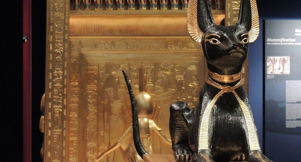 Un gato egipcio (archivo)