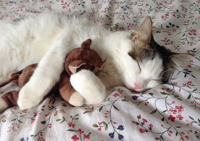 Los gatos son una entrañable opción como mascota