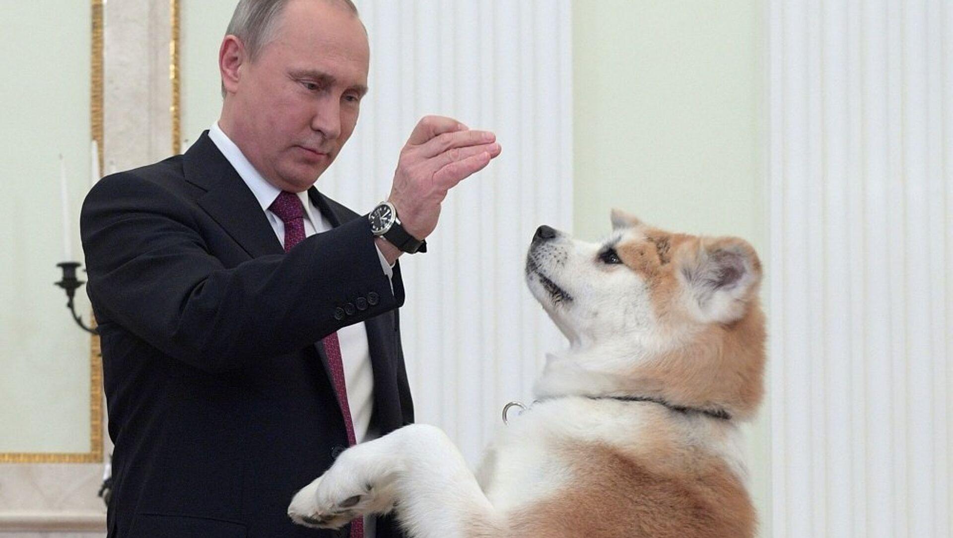 El presidente de Rusia, Vladímir Putin y su perra, Yume - Sputnik Mundo, 1920, 14.12.2016