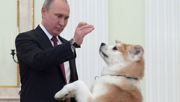 Vladímir Putin y sus perros - Sputnik Mundo