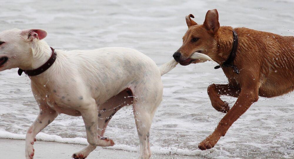 Dos perros jugando (imagen referencial)