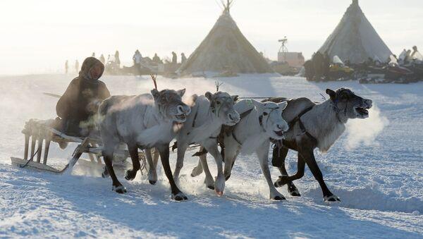 Праздник День оленевода в Салехарде - Sputnik Mundo